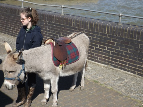 Donkey at riverside Surrey Docks Farm on Saturday