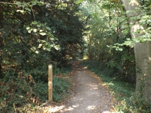 Path through Purley Beeches
